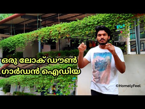 Turtle Vine Hanging Idea | Lockdown Gardening Ideas | Ever Green Turtle Vine  | Homely Feel | Diyab