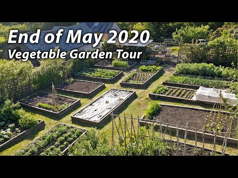 Vegetable Garden Tour | Late May in Our Organic & Permaculture Inspired Kitchen Garden