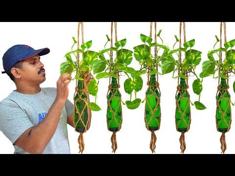 money plant hanging ideas /money tree /glass bottle gardening ideas