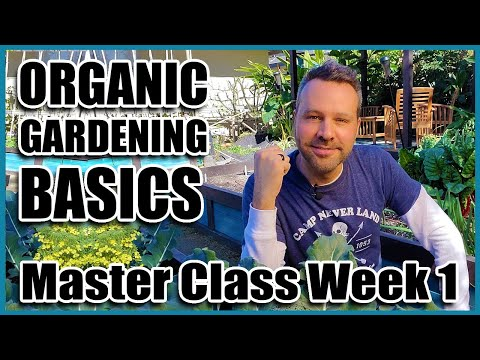 Organic Gardening Basics  – Week 1 of 4